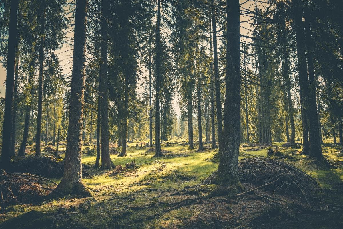 metsä vihreä valo