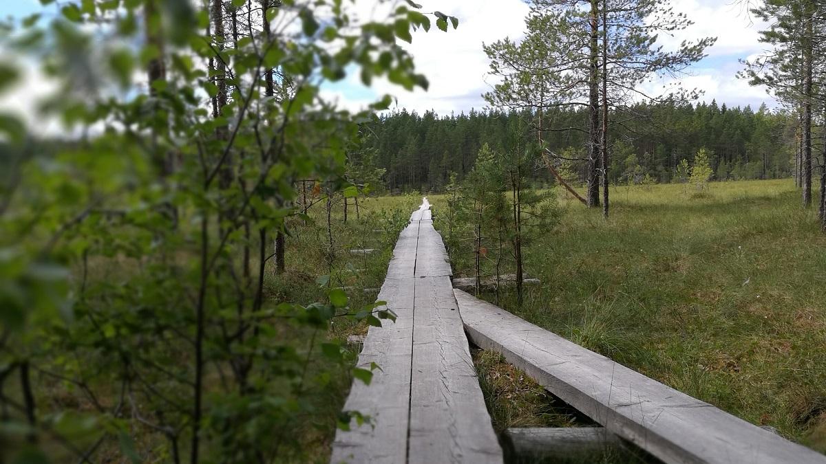 vihreä luonto pitkospuut