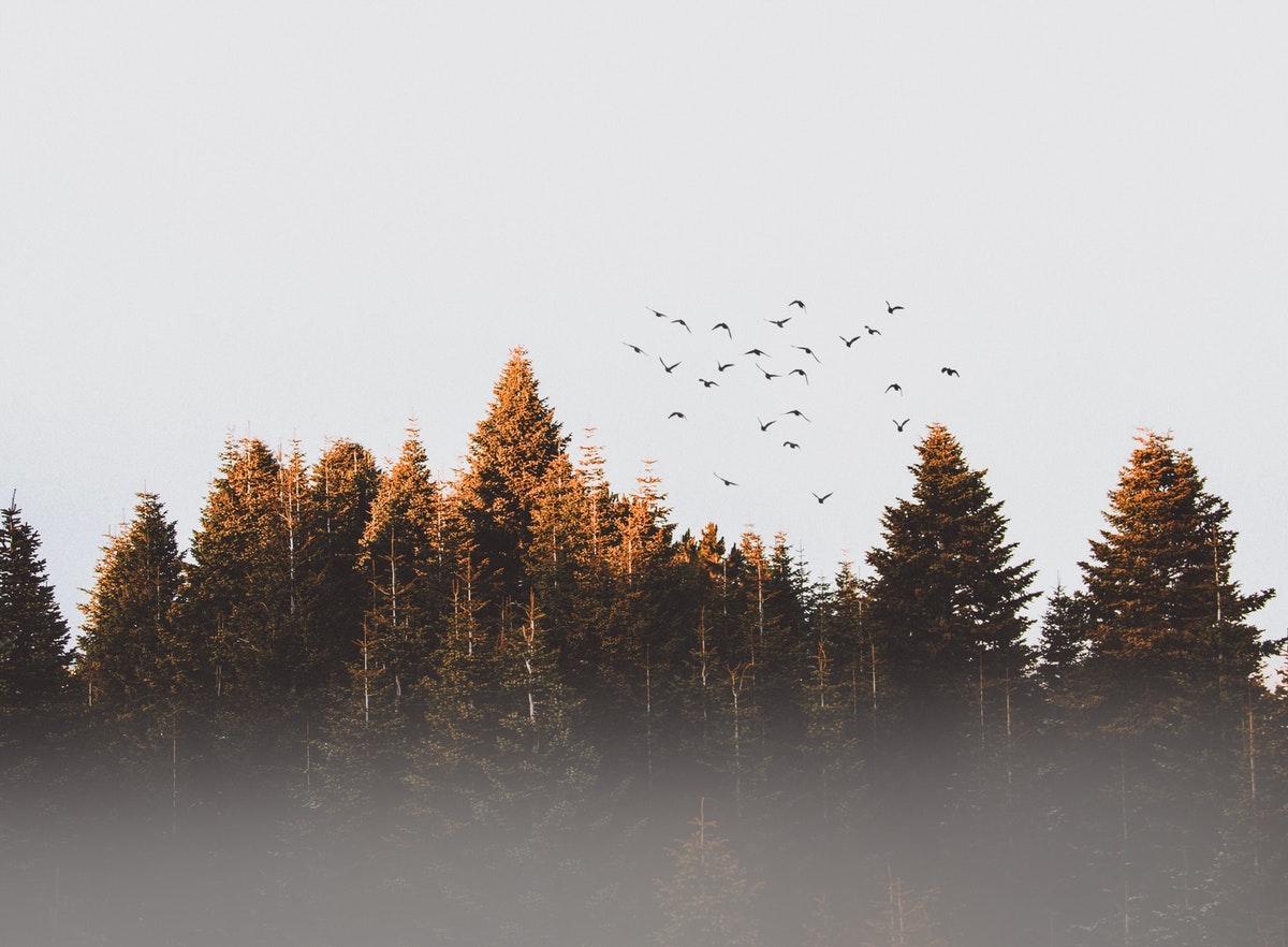 lintuparvi ruskametsän yllä