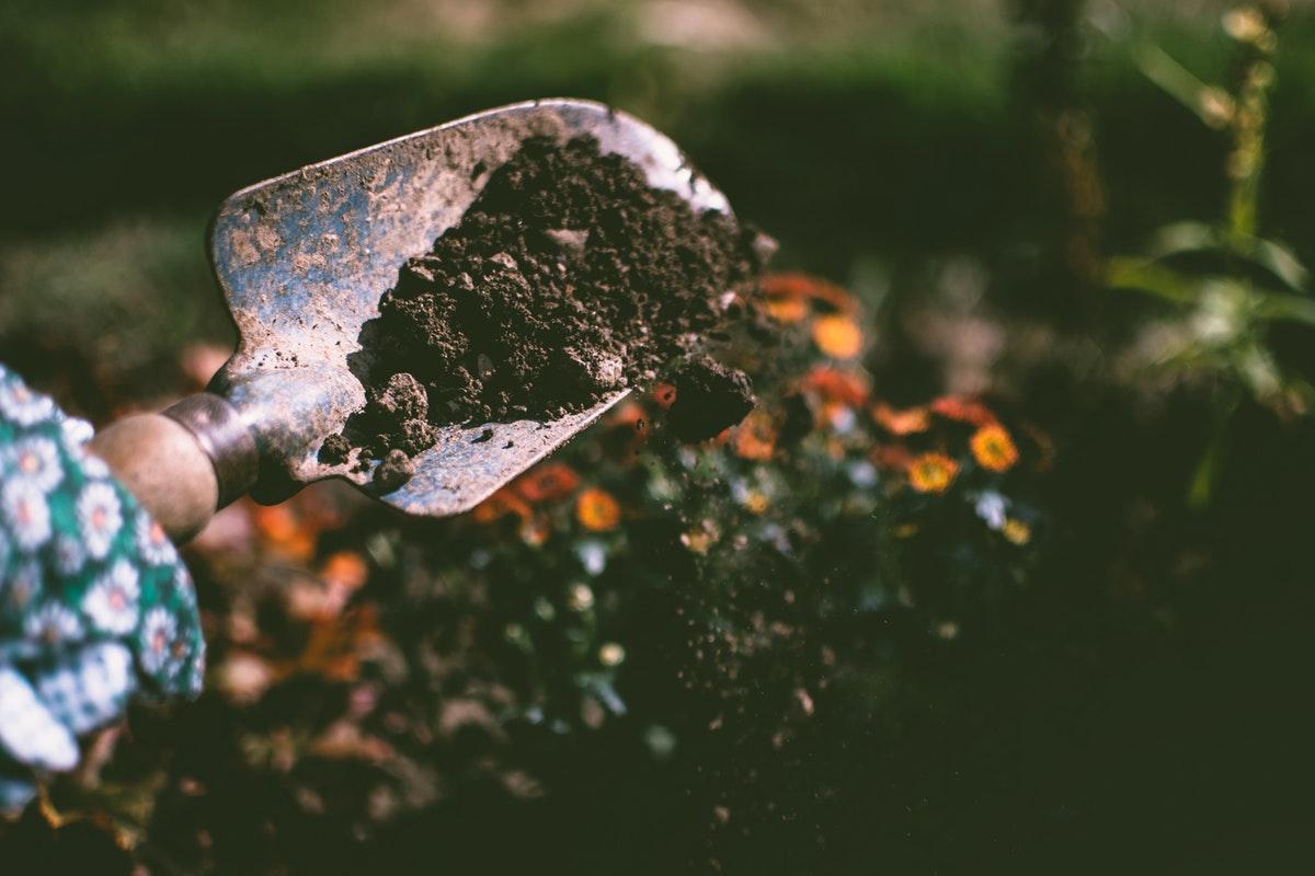 kuokka ja multaa puutarhassa