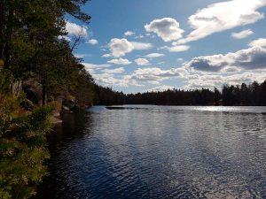 metsän reunustama järvimaisema