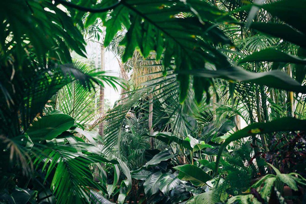 Viidakkomaisema palmunlehtien välistä kuvattuna