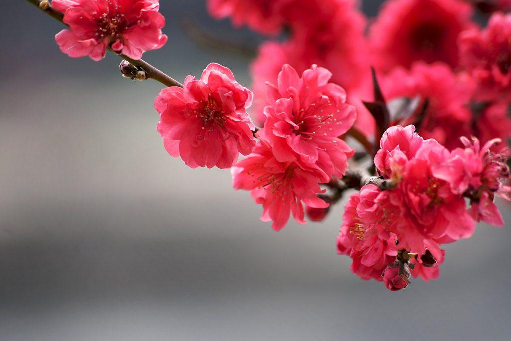 Punaiset kukat puun oksassa