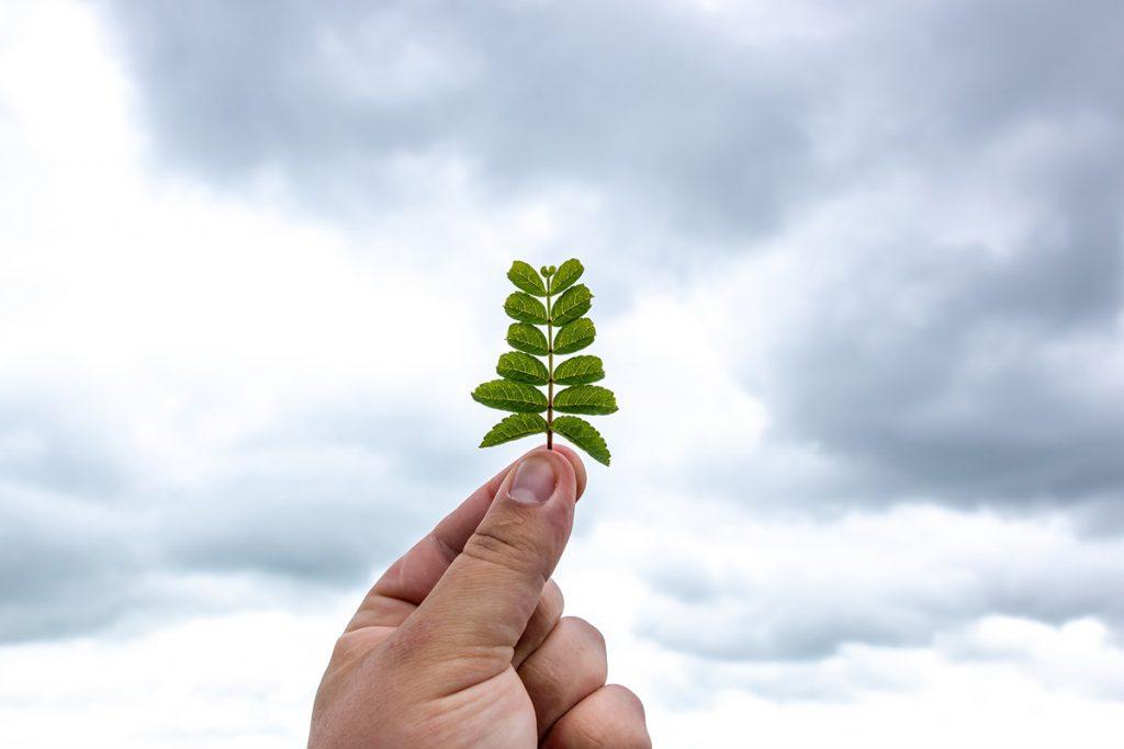 Käsi pitelee kasvin lehteä taivasta vasten