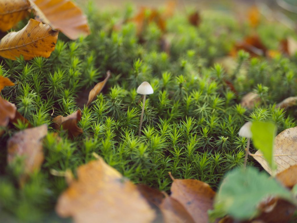 Sammalta, lehtiä ja sieni