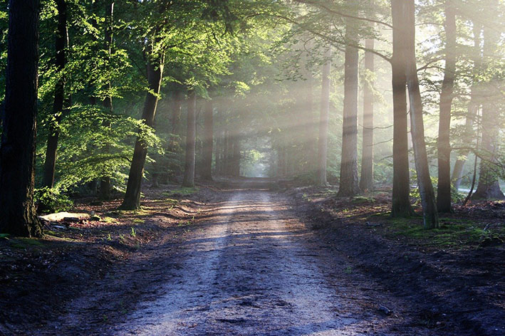 Metsätie, jolle paistaa aurinko