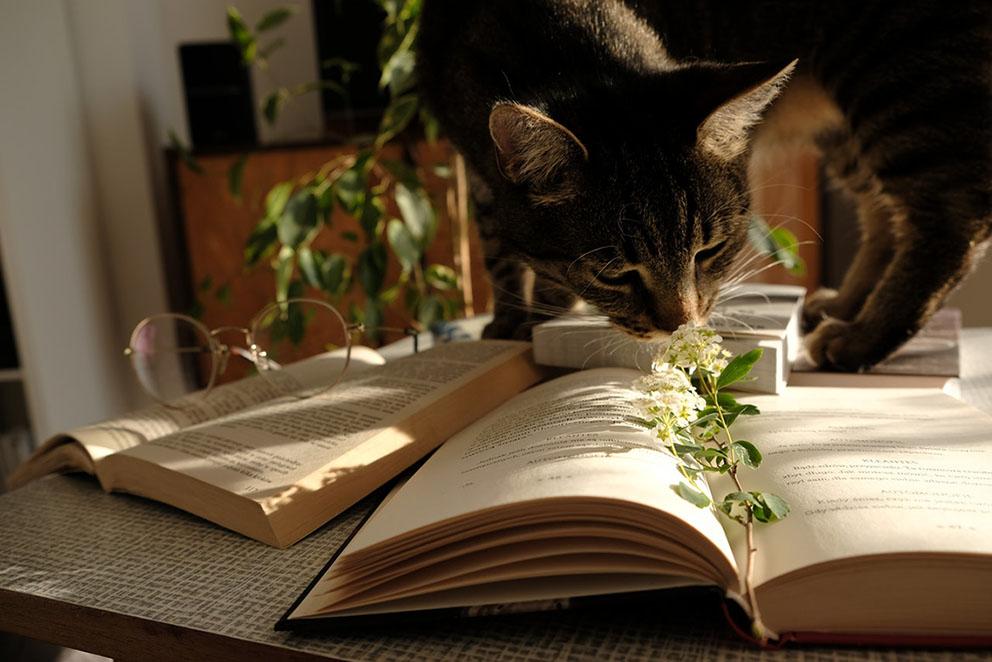 Pöydällä kissa, silmälasit ja kirjoja