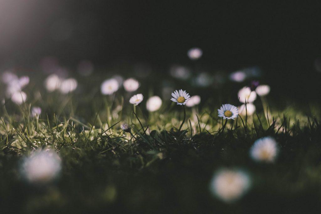 Kukkaiseen nurmeen osuu valoa